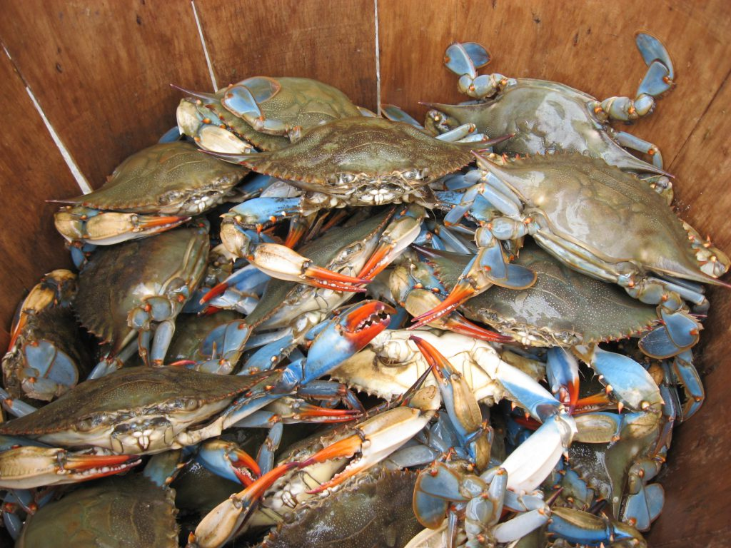 Home - Karflex Fisheries Limited